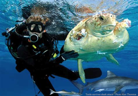 Marine Biologist for a Day - Kid 101