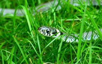 Keep Your Kids Safe From Snakes and Bugs - Medical