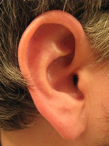 Ear diseases and its treatments in Ayurveda – Ayurveda